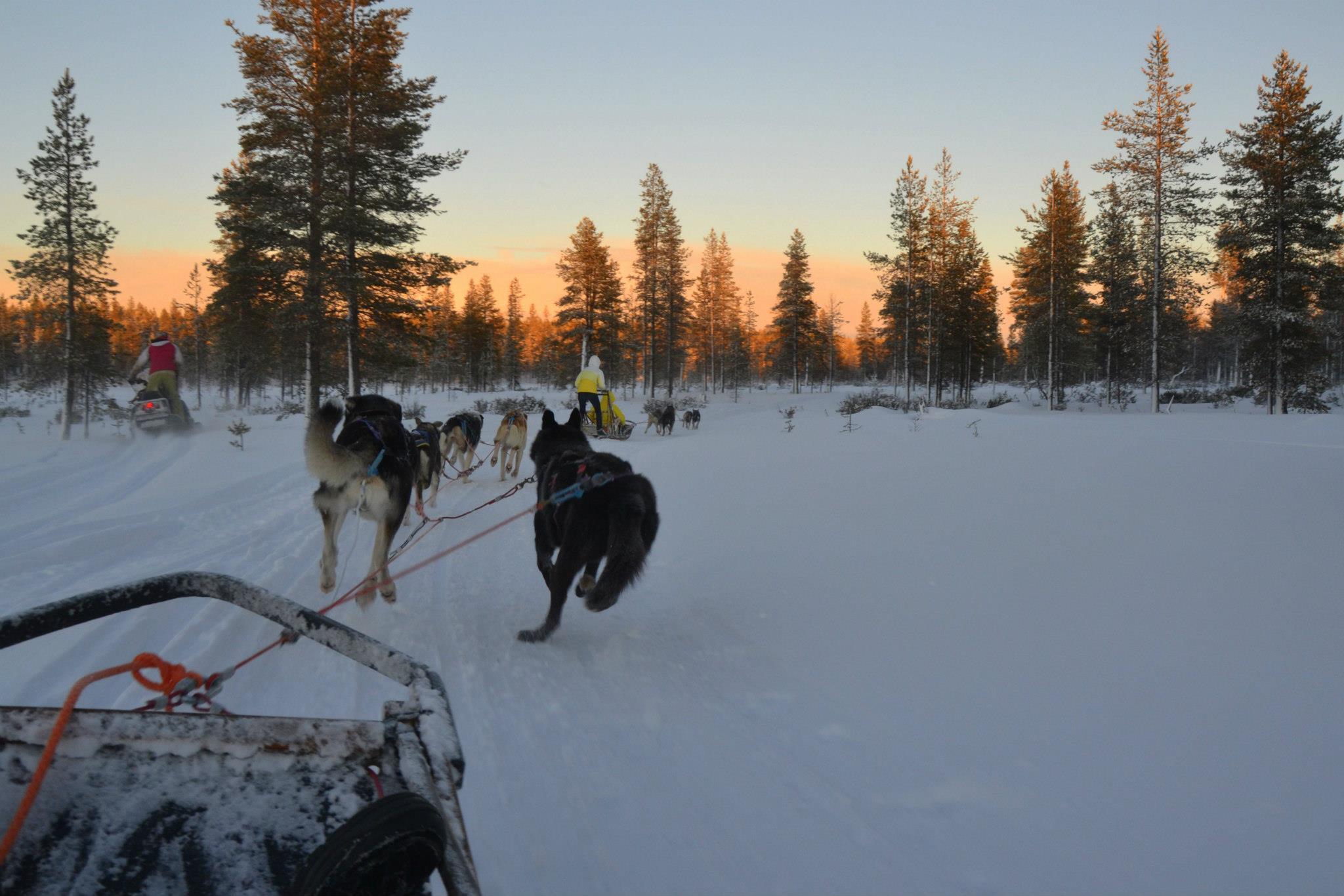 Jízda a řízení saní tažených psy Husky.