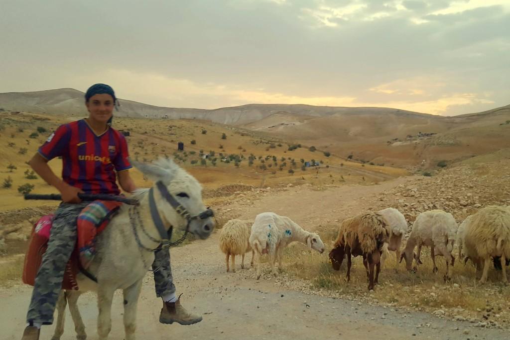 pasák ovcí v palestinské vesnici (foto by Janča)
