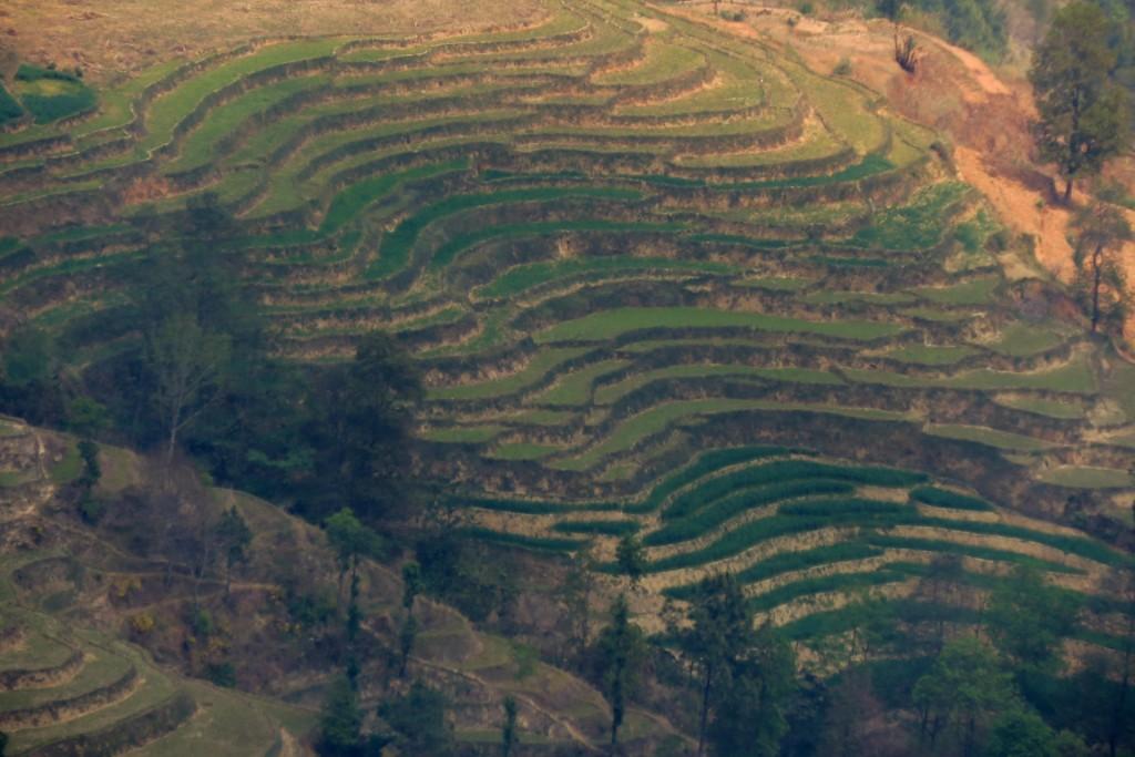 rýžové terasy Nagarkot