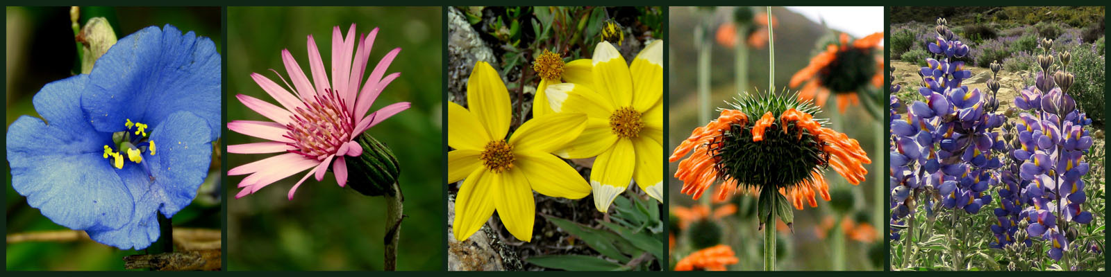 Peru květiny